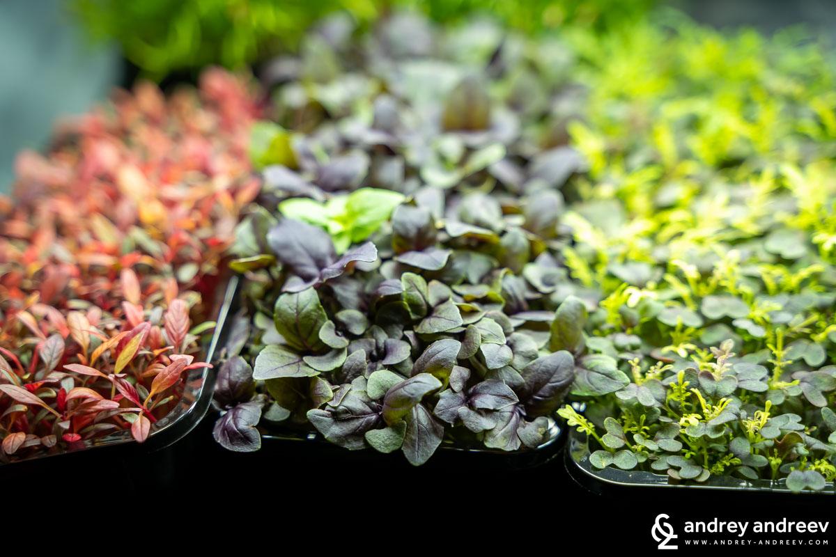 Разноцветни микрорастения