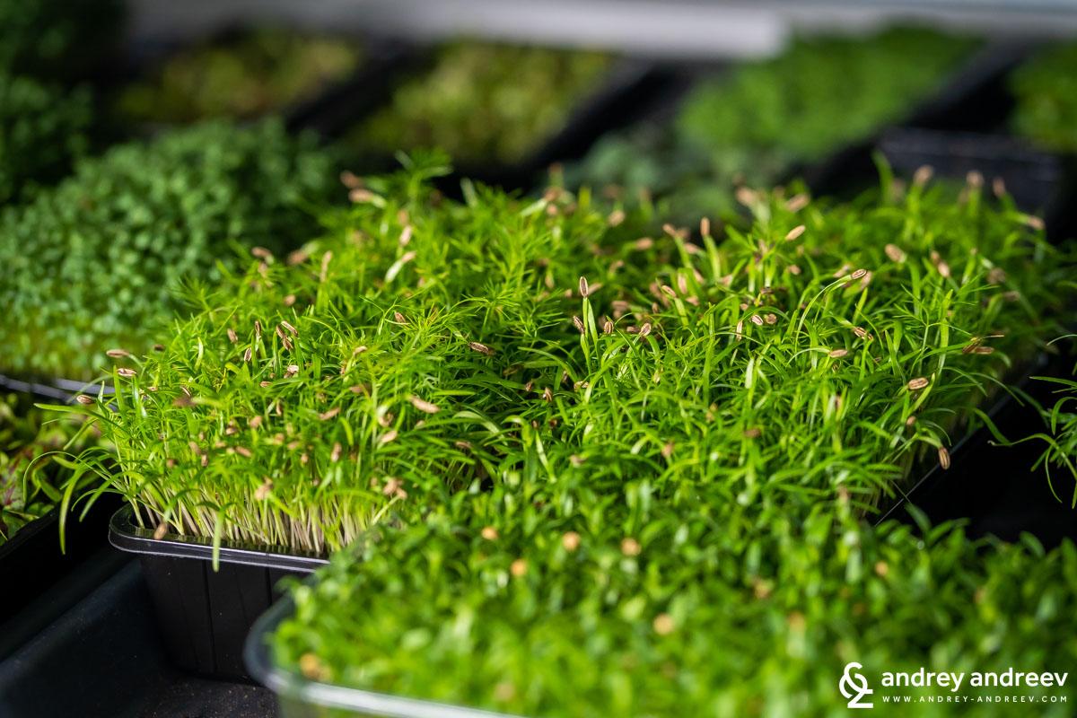 Свежи зелени микрозеленчуци