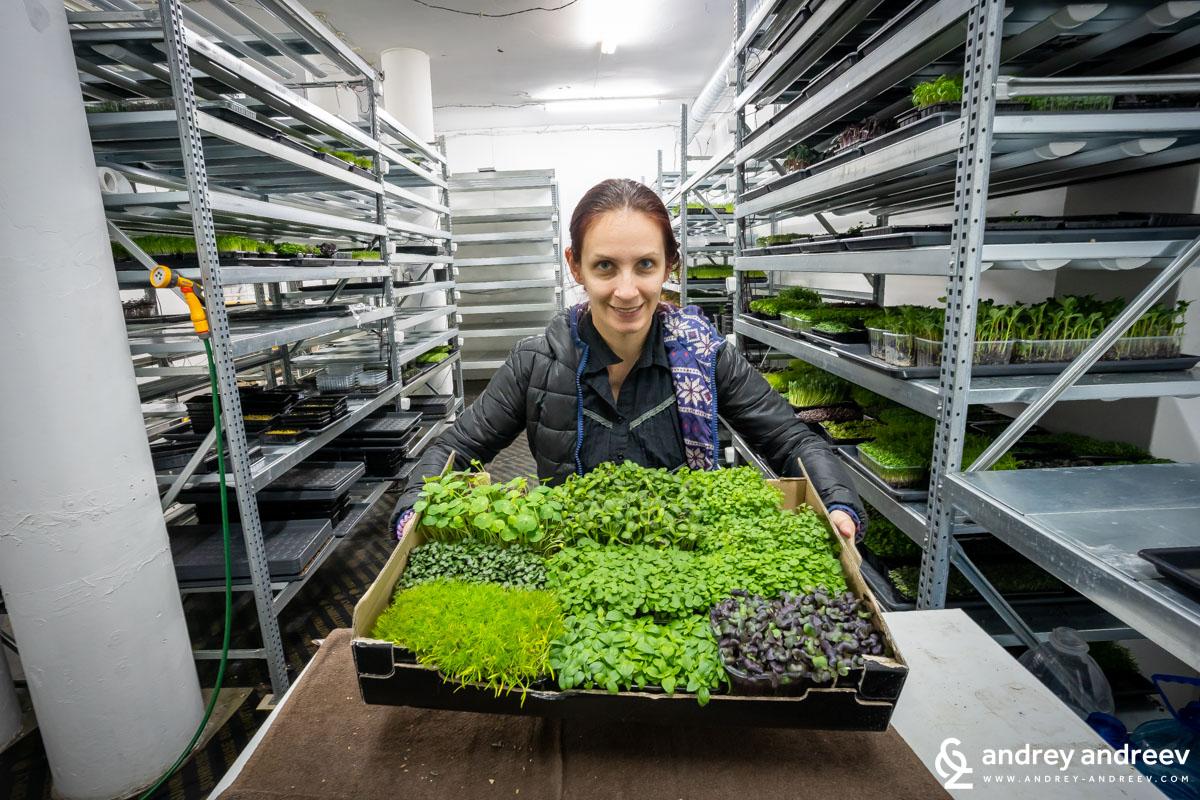 Жива салата от микрорастения за вкъщи